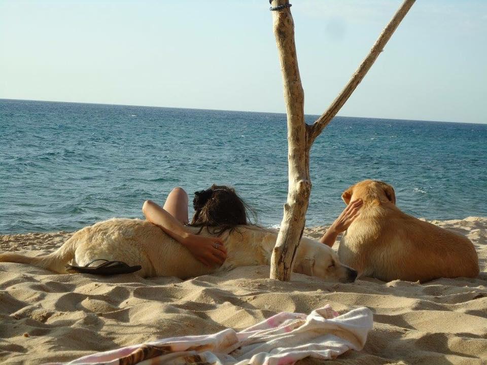 In spiaggia con il tuo Pet